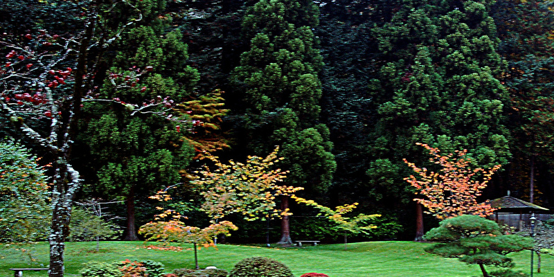 autumn-blaze-trees-amp-pruning-593f8f78f1a09.jpg