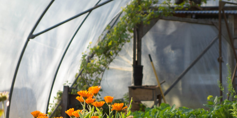 the-best-way-to-use-photinia-to-get-a-hedge-594145b177afa.jpg