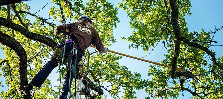 tree-care-tips-to-keep-your-tree-healthy.jpg